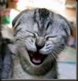 gato-risa
