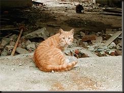 Un gato parecido a este es el protagonista de la historia.