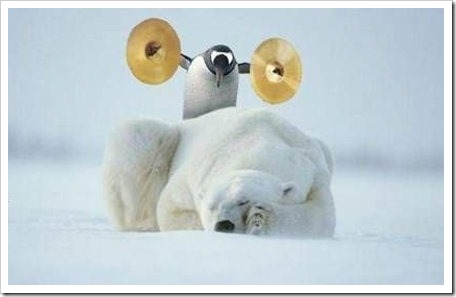 Despertando_Al_Oso_Polar