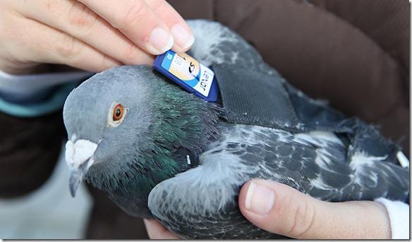 Pigeon-Send-SD-card