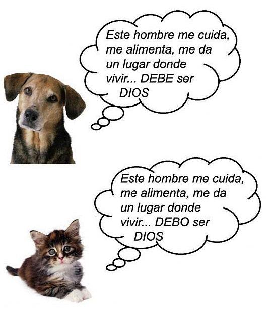 diferencia-entre-perros-y-gatos