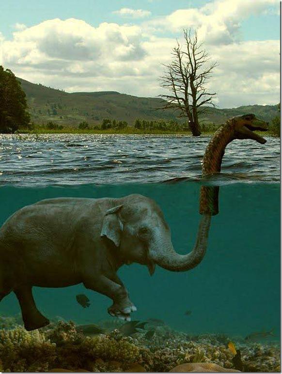 elefante-con-sentido-del-humor