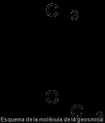 Esquema de la molécula de la geosmina.