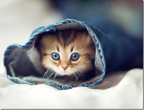 World-s-cutest-kitten